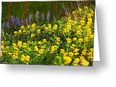 Wyoming Wildflowers Greeting Card by Rebecca Pickrel