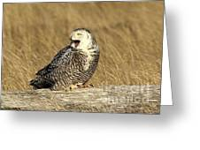 Yawning Owl Greeting Card by Terry Horstman