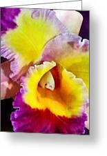 Yellow And Magenta Cattleya Orchid Greeting Card by Susan Savad