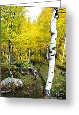 Yellow Aspens Greeting Card by Baywest Imaging