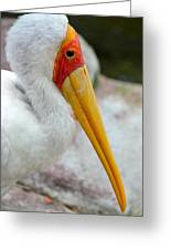 Yellow Billed Stork Greeting Card by Richard Bryce and Family