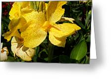 Yellow Canna Lily Greeting Card by Shawna  Rowe