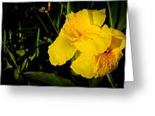Yellow Canna Singapore Flower Greeting Card by Donald Chen