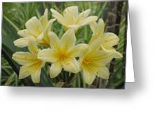 Yellow Clivia Lily Greeting Card by Alfred Ng