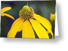 Yellow Cone Flower Rudbeckia Greeting Card by Rich Franco