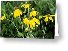 Yellow Cone Flowers Rudbeckia Greeting Card by Rich Franco