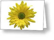 Yellow Daisy  Greeting Card by Mauro Celotti