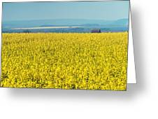 Yellow Field Greeting Card by Svetlana Sewell