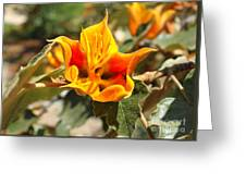 Yellow Flower Greeting Card by Gregory Dyer