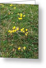 Yellow Flowers Greeting Card by John Williams