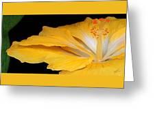 Yellow Hibiscus. Detail Greeting Card by Ben and Raisa Gertsberg