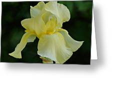 Yellow Iris Greeting Card by Sandy Keeton