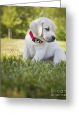 Yellow Lab Puppy In The Grass Greeting Card by Diane Diederich