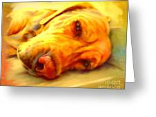 Yellow Labrador Portrait Greeting Card by Iain McDonald
