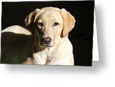 Yellow Labrador Retriever Dog Youth Greeting Card by Jennie Marie Schell