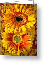 Yellow Mums Together Greeting Card by Garry Gay