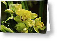 Yellow Orchid Greeting Card by Terry Horstman