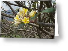Yellow Plumeria  Greeting Card by Mindy Sue Werth