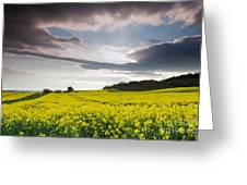 Yellow Rapeseed Field Beautiful Greeting Card by Boon Mee