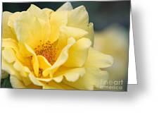 Yellow Rose Macro Greeting Card by Carol Groenen