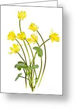 Yellow Spring Wild Flowers Marsh Marigolds Greeting Card by Elena Elisseeva