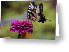 Yellow Tiger Swallowtail Butterfly Greeting Card by Kay Novy