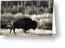 Yellowstone National Park Bison Greeting Card by Gregory Dyer