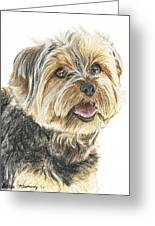 Yorkie In Color Greeting Card by Kate Sumners
