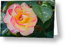 You love the roses - so do I Greeting Card by Christine Till