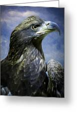Young Bald Eagle V2 Greeting Card by F Leblanc