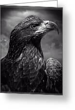 Young Bald Eagle V4 Greeting Card by F Leblanc