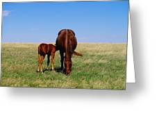 Young Colt And Mother Greeting Card by Jeff Swan