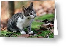 Young Manx Cat Greeting Card by James L. Amos