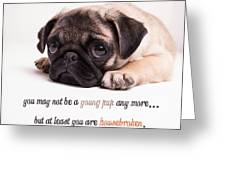 Young Pup Greeting Card by Edward Fielding