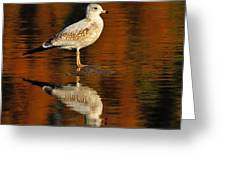 Youthful Reflections Greeting Card by Tony Beck