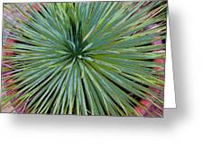 Yucca 2 Greeting Card by Frank Tozier