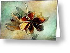 Yucca Pod - Barbara Chichester Greeting Card by Barbara Chichester