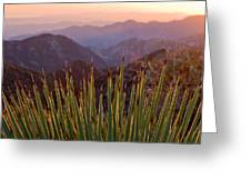 Yucca Spikes Greeting Card by Adam Pender