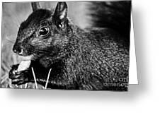 Yummy Nuts Greeting Card by Fatemeh Azadbakht