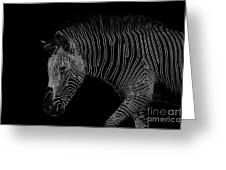 Zebra Art Greeting Card by Bianca Nadeau