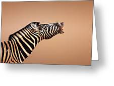 Zebra Calling Greeting Card by Johan Swanepoel