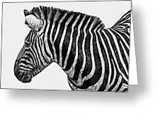 Zebra - Happened At The Zoo Greeting Card by Jack Zulli