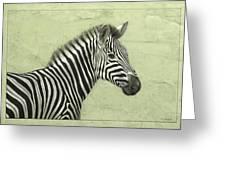 Zebra Greeting Card by James W Johnson