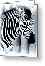 Zebra Greeting Card by Kathleen Struckle