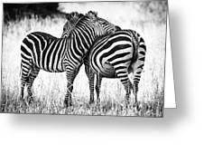 Zebra Love Greeting Card by Adam Romanowicz