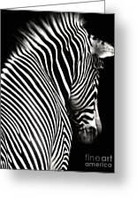 Zebra On Black Greeting Card by Elle Arden Walby