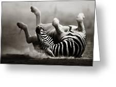 Zebra Rolling Greeting Card by Johan Swanepoel