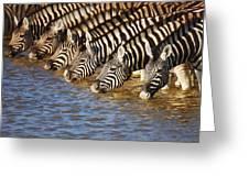 Zebras Drinking Greeting Card by Johan Swanepoel
