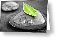 Zen Stones Greeting Card by Elena Elisseeva