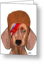 Ziggy Aladdin Sane Dog Greeting Card by Kelly McLaughlan